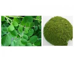 Organic Moringa Leaves | Leaf Powder | Oil Manufacturers, Wholesale
