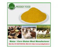 Corn Gluten Meal Manufacturers in India
