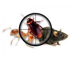 termite pest control in chennai