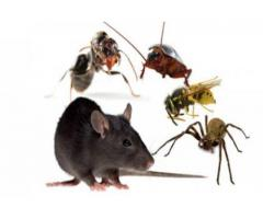 rodent control services in chennai