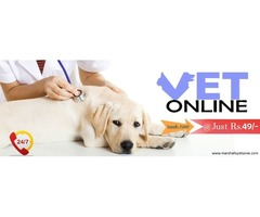 Ask A Vet Online @ Just Rs. 49/- Click To Book Now