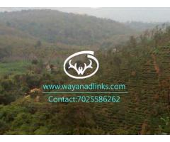 Stream frontage land for sale near Mananthavady